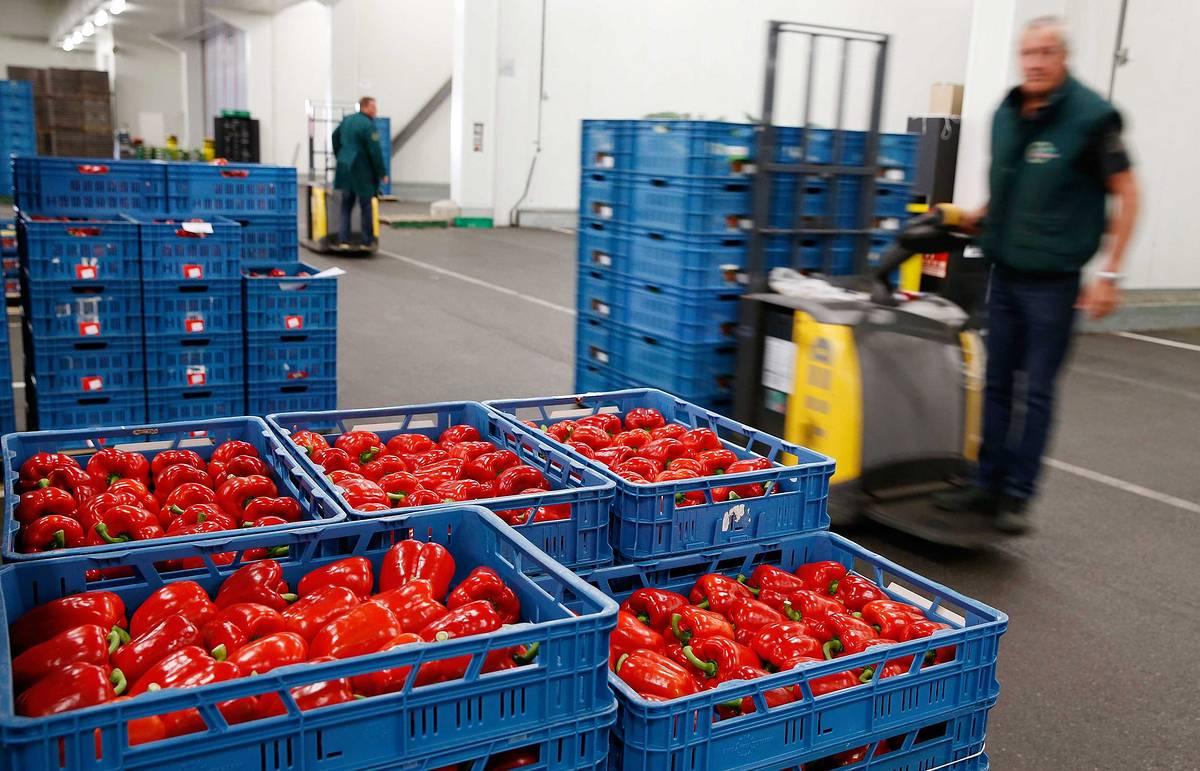 транспортировка овощей и фруктов
