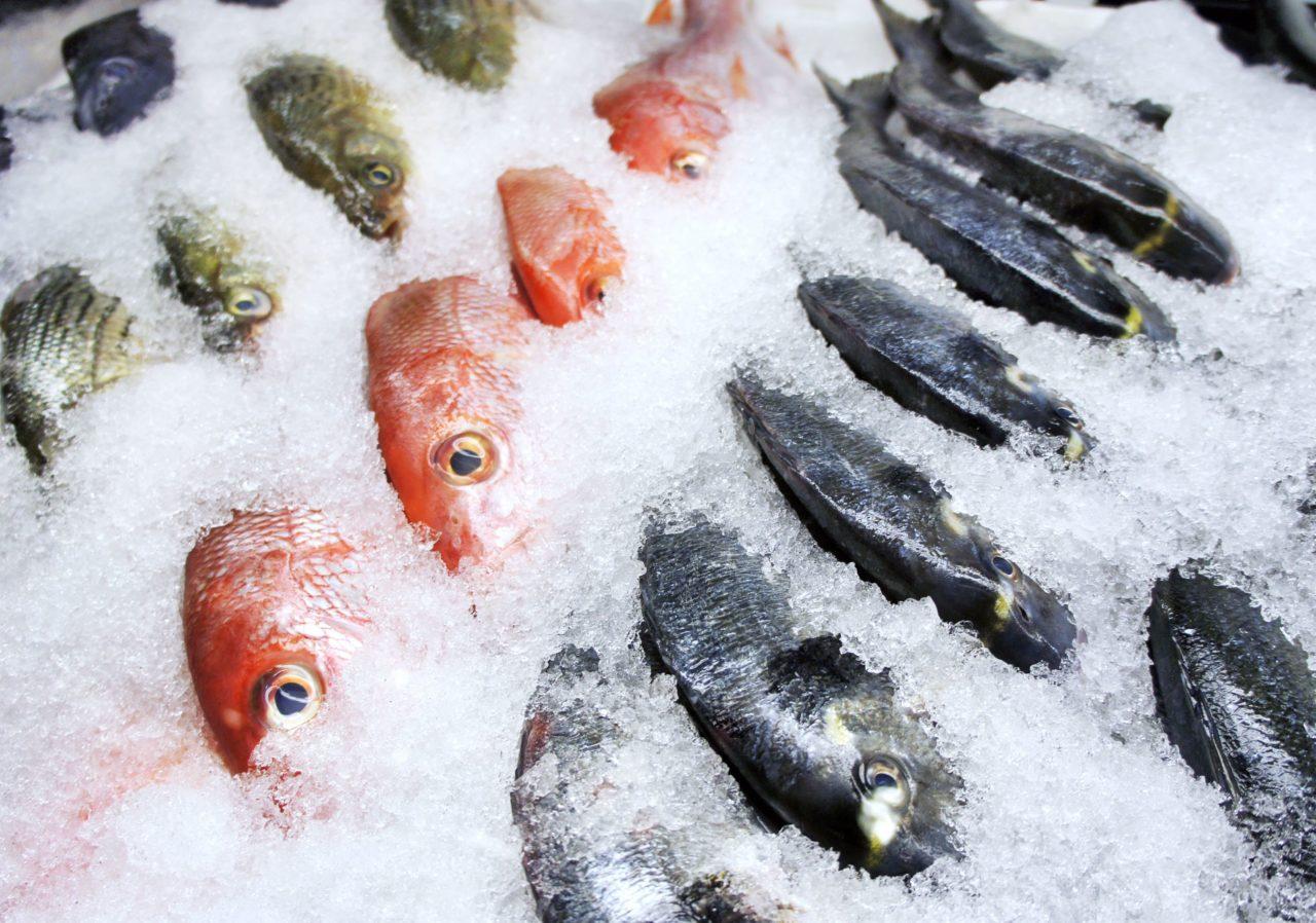 перевозка рыбы